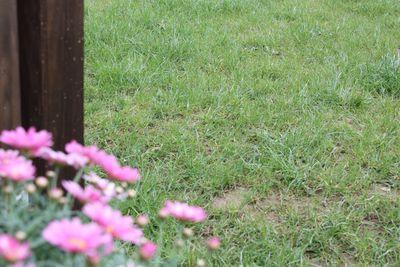 Rasen-Oase mit Rollrasen