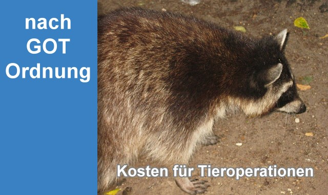 Online berechnen Operation Hund Kosten, Operation Katze Kosten Tieroperation Kosten
